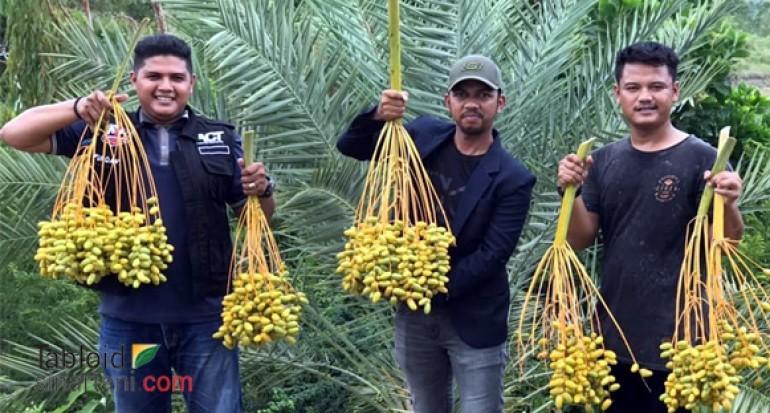 500 Ha Kebun Kurma Di Aceh Bisa Hasilkan 300 Kg Per Pohon