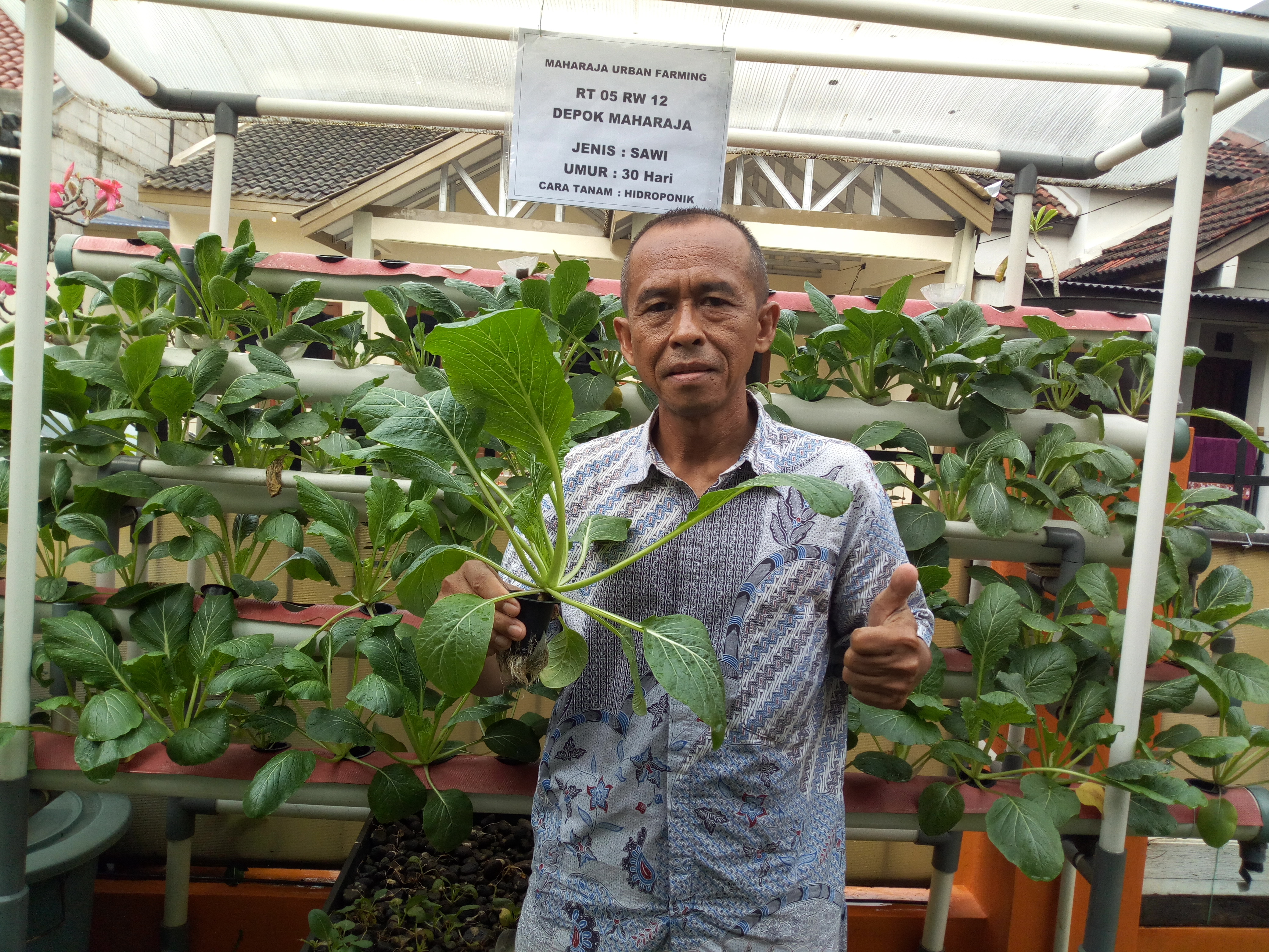 Slamet Riyanto sedang menunjukkan hasil menanam sawi hidroponik di depan instalasi hidroponiknya yang siap dipanen.